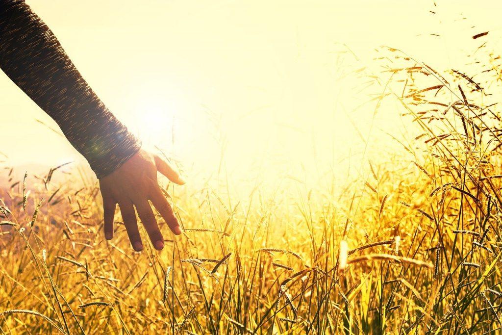Job 12:7-12 La creación da testimonio de su Creador